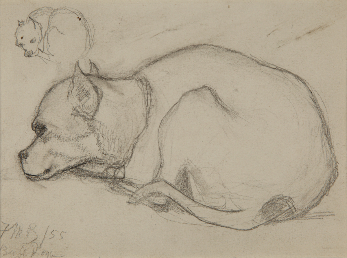 Study of a dog (bull terrier pup)