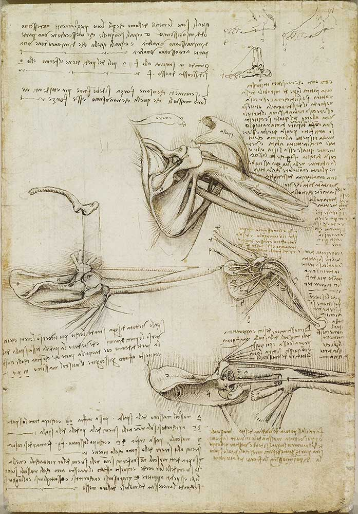 Leonardo da Vinci, The bones and muscles of the shoulder c.1510-11, RCIN 919001, Royal Collection Trust © Her Majesty Queen Elizabeth II 2019